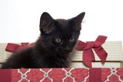 黑匣子礼品小猫 免版税库存照片