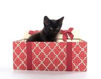 黑匣子礼品小猫 免版税图库摄影