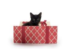 黑匣子礼品小猫 库存图片