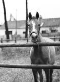 1匹马 免版税库存照片