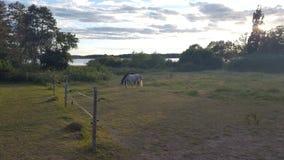 01匹马 免版税图库摄影