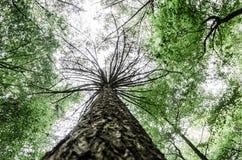 区域卓著的自然秀丽2 -布里斯托尔英国 库存照片