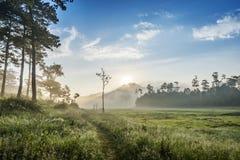 区域在Suoi近Tia Ho Tuyen Lam湖,大叻市城市,越南 免版税图库摄影