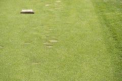 区域的发球区域在高尔夫球场 免版税库存图片