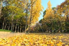 区域的图象在大阪城堡,大阪,日本的秋天 免版税库存照片