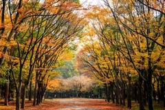 区域的图象在大阪城堡,大阪,日本的秋天 免版税库存图片