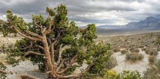 区峡谷保护国家红色岩石 免版税库存图片