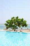 区开花的旅馆木兰重新创建结构树 免版税库存图片