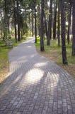 区长凳曲线森林公园铺磁砖的路径手段 库存图片