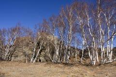 区arshihaty森林风景石头 库存照片