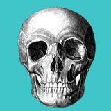 医学-人的头骨-维多利亚女王时代的解剖图画 库存图片