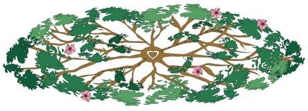 医治用的结构树 免版税库存图片