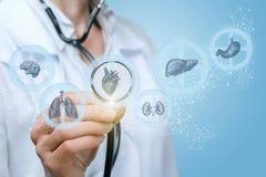 医生审查人类健康机制  库存照片
