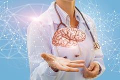 医生审查人脑 库存图片