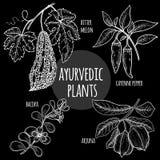 医疗Ayurvedic种植在黑板的白色白垩 向量例证