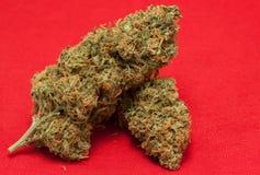 医药的大麻 免版税库存照片