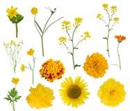 十三朵黄色被隔绝的花收藏 图库摄影
