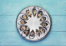 十二只新鲜的牡蛎 图库摄影