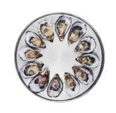 十二只新鲜的牡蛎 免版税库存照片