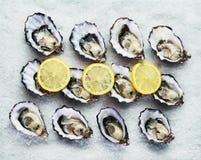 十二只新鲜的牡蛎 库存图片