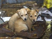 十二无家可归的眼睛 免版税库存照片