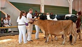 十几岁在FFA集市S的显示母牛 免版税库存图片