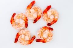 十只煮熟的鸡尾酒老虎虾 库存图片