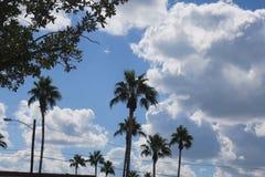 十棵棕榈在一个部分晴天 免版税库存照片