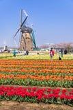 千叶,日本4月14日:游人参观五颜六色的郁金香领域,车公 图库摄影