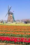 千叶,日本4月14日:游人参观五颜六色的郁金香领域,车公 免版税库存照片