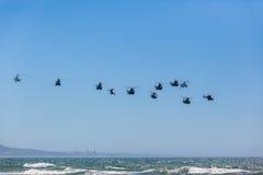 直升机军队编组飞行 免版税库存照片
