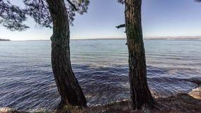 直升机在两棵树之间的冒险飞行向海 天线, 4k 股票录像