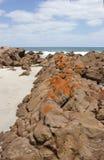 升火海湾,袋鼠海岛 图库摄影