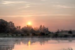 升起在沼泽的太阳 免版税库存图片