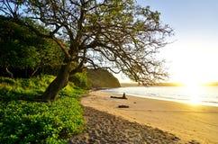 升起在Playa布朗卡海滩的太阳在Papagayo,哥斯达黎加 库存照片
