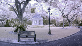 午后红外场面新加坡植物园 库存图片