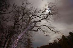 午夜树 免版税库存图片