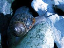 午夜蜗牛 免版税库存照片