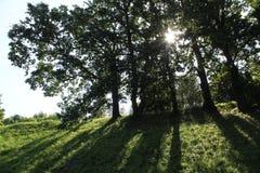 午间与橡木的夏天风景反对太阳 投下阴影的树在公园 免版税库存图片