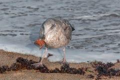 午餐的时刻在海滩 库存照片