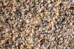 半岛克里米亚,亚速号海的海岸 海滩是covere 免版税库存图片