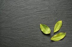 半干海湾月桂树在黑板岩石头离开与文本的拷贝空间作为模板食物背景 顶面平的看法 免版税图库摄影