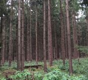 半开敞的森林 库存照片