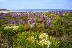 半月湾在春天 免版税库存图片