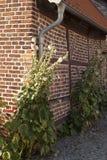 半木料半灰泥的议院在Rehna 免版税库存照片