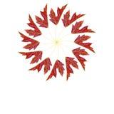 半槭树叶子 库存照片