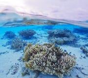 半海岛和礁石水下的场面  免版税库存照片