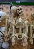 半身体人的骨骼为万圣夜 免版税库存照片