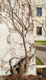 华丽分支的树 图库摄影