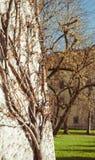 华丽分支的树 免版税库存图片